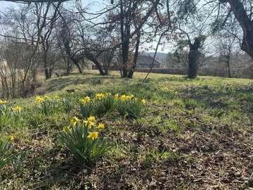 Einfamilienhaus in Magyarlak Bild 07