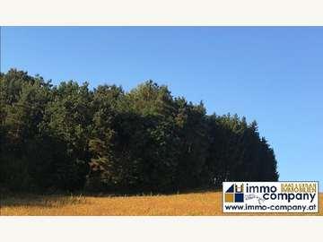 Forstwirtschaft in Güssing