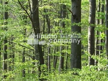 Villa in Sankt Nikola an der Donau Bild 02